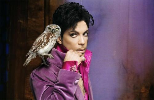 prince-owl-look.jpg