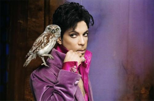 prince-owl-walk-away.jpg